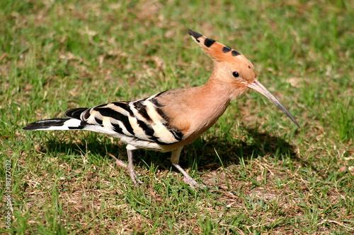 Oiseau dans un parc duba photo libre de droits sur la for Houpette oiseau