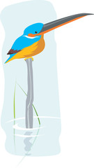 Illustration of a kingfisher sitting