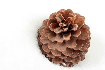 Background with cone on white snow
