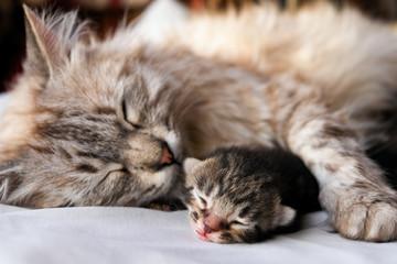 Cat and her kitten hugs