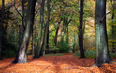 Vibrant woodland scene in autumn