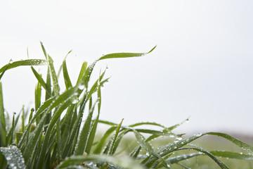 grass leaves against sky