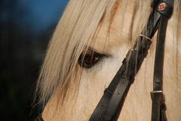 Printed kitchen splashbacks Horses Horse