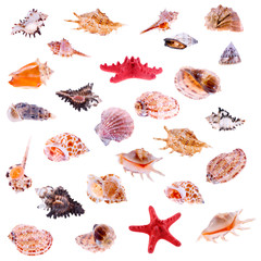 Big collage of different shells