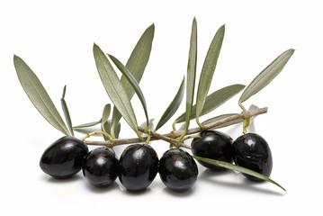 Rama repleta de olivas negras.