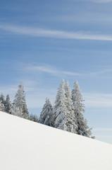 Winterbäume_17