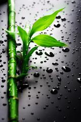 Fototapete - Bamboo