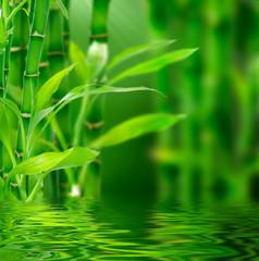 Fototapete - Fresh bamboo