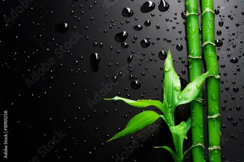 Fototapete Bamboo over Black