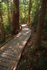 Sunshine breaking thru on wooden boardwalk in the rainforest