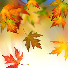 Wall Mural - Falling Autumnal Leaves