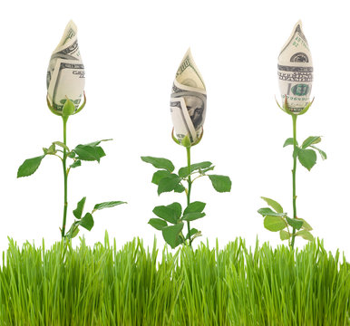 Growing Dollars.Conceptual image