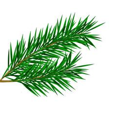 Fir twig