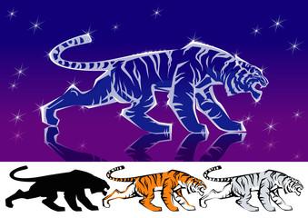 Shining tiger