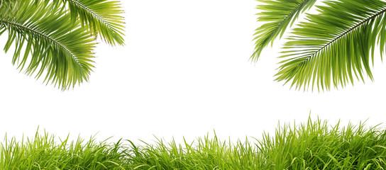 Photo sur Toile Palmier feuilles de palmier et herbe fraîche
