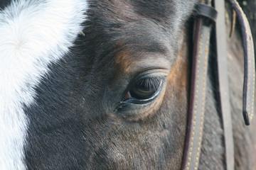Occhio di cavallo
