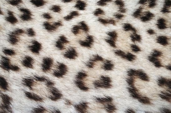 leopard skin spots