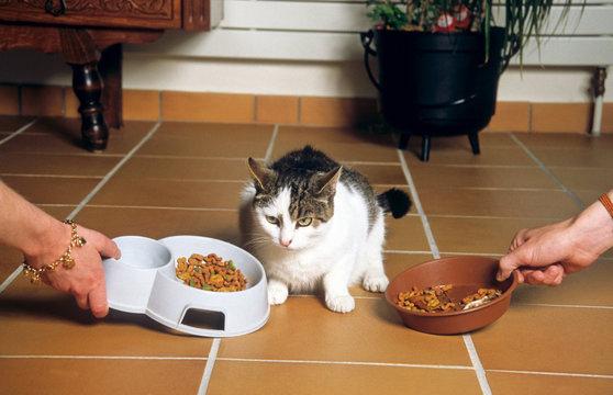 chat de gouttière testeur de croquettes industrielles
