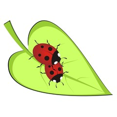 Two red ladybirds on green leaf