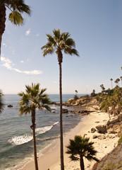 palm beach with rocks