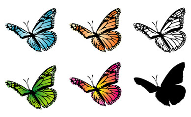 Butterfly color variation