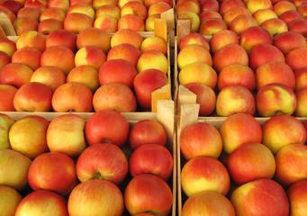 Apples in market crates