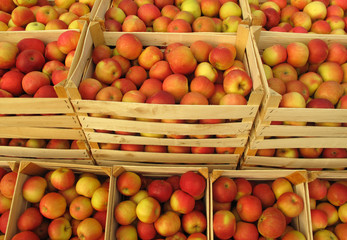 Apples in wooden crates on market