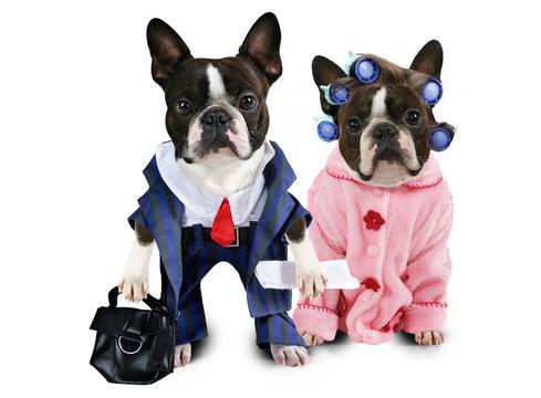 dog couple