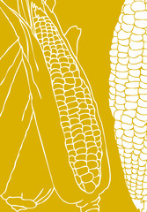 Eco fresh Vegetable background Ear Of Corn, cobs illustration. E