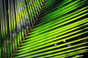 Palmy Leaf