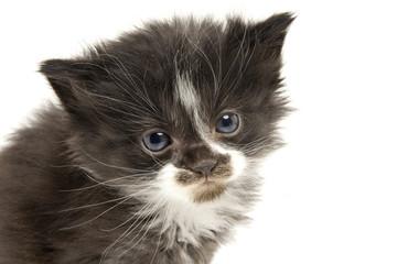 Little kittens.