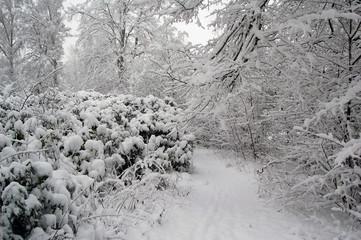 Forêt scandinave en hiver recouverte de neige