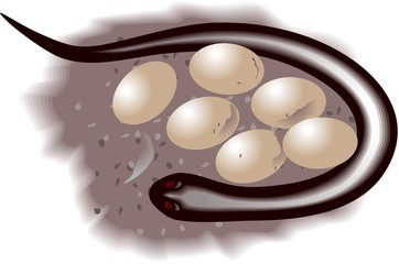 Illustration of Snake and eggs in colour