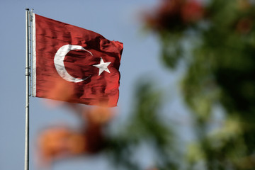 an image of Turkish flag among the branches