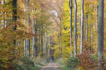 Weg im  Herbstwald