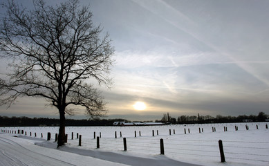 Winter - Snow covered meadow