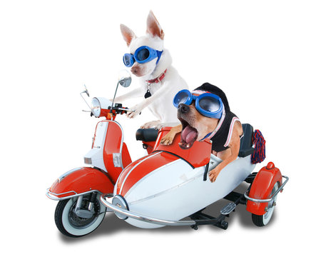 scooter dogs