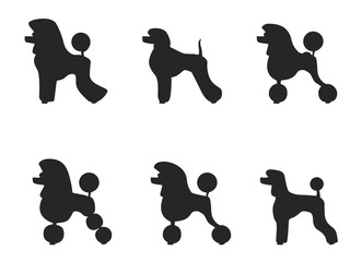 black poodle clipped in various styles