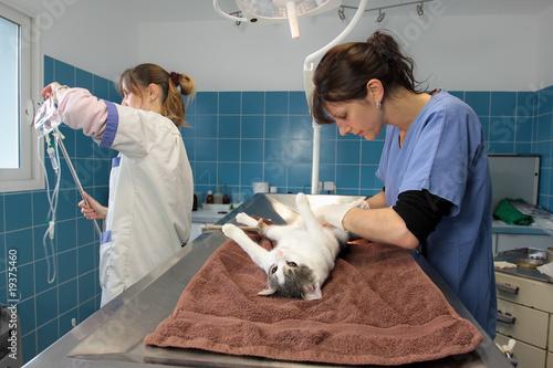 Stériliser mon chat gratuitement