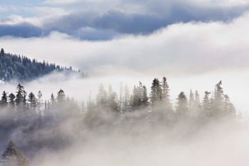 Inspirational Pictures of Pine Trees covered in mist