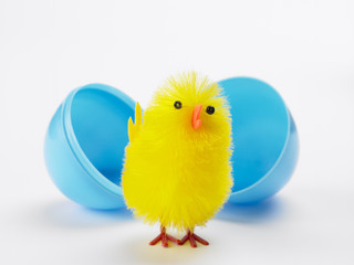Easter Chick Hatching Out Of Egg