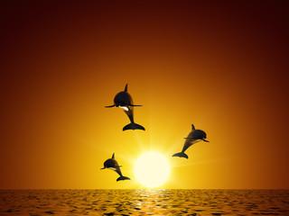 Photo sur Aluminium Dauphins Three dolphins swimming in the ocean