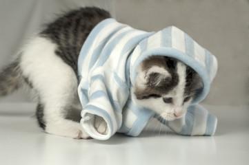 Pyjamakätzchen