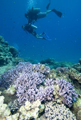 Scuba divers in crystal clear water