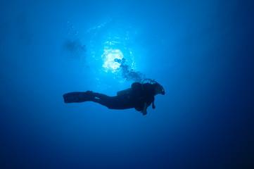 Plongeuse dans le bleu, mer Rouge, Soudan