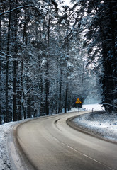Forest Road in winter - right to turn left