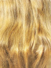 blond hair closeup