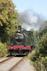 Steam train driving through the woods
