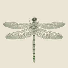 dragon-fly on a neutral background