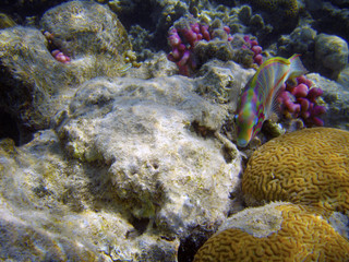 Beautiful coral reef with small fishes underwater photography.